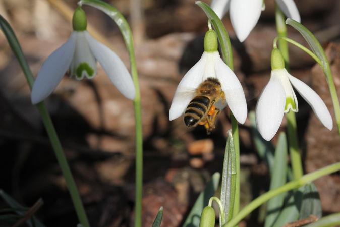 pszczola 02