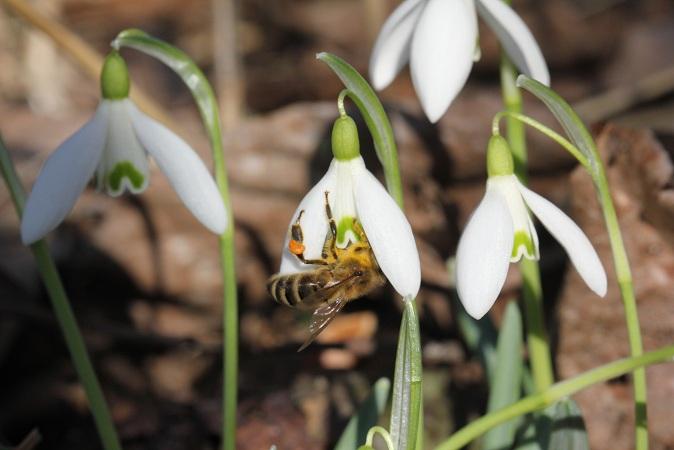 pszczola 03