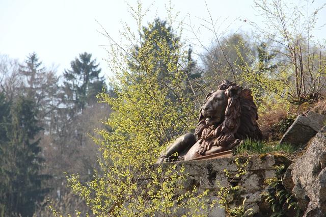 lew czuwający